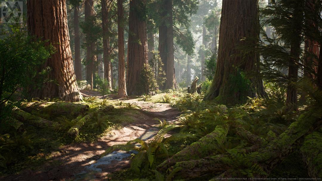 Redwood Forest Collection