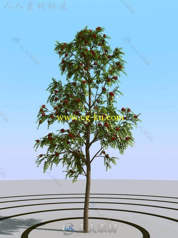 建筑配景树木园林人物素材精选版(60GB)