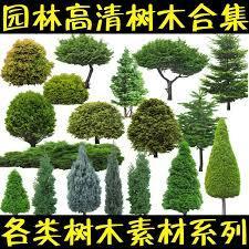 PSD高清树木植物近景绿化效果图后期PS分层素材