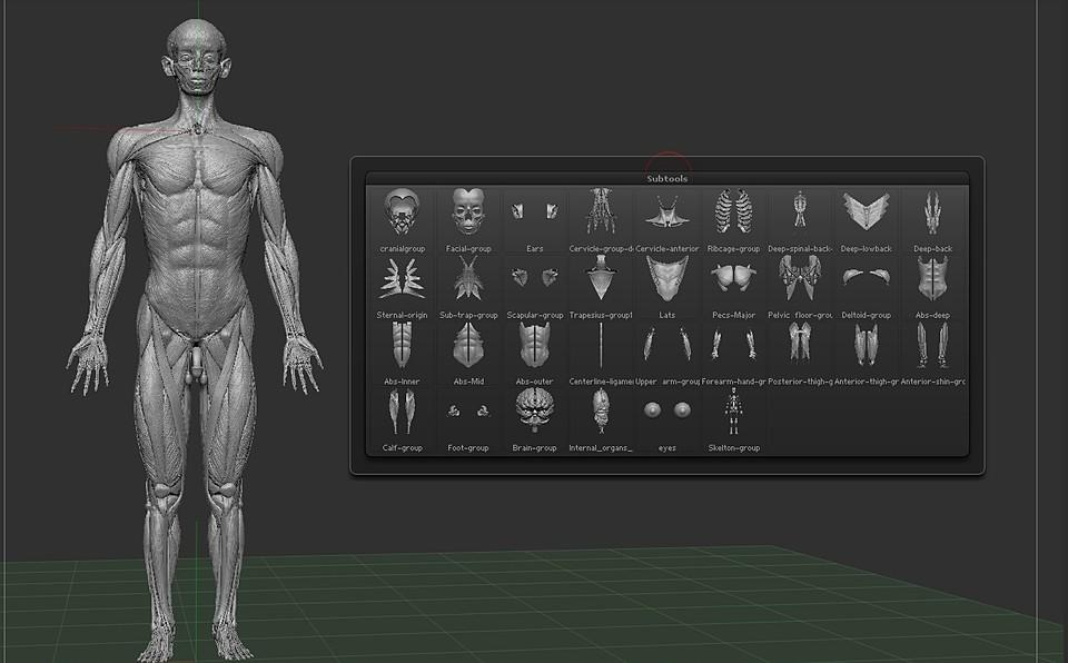 3D人体解剖模型扫描3D Human Anatomy Model (Scanned) for Cinema 4D