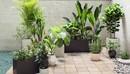 Maxtree - Plant Models Vol 19-缩略图