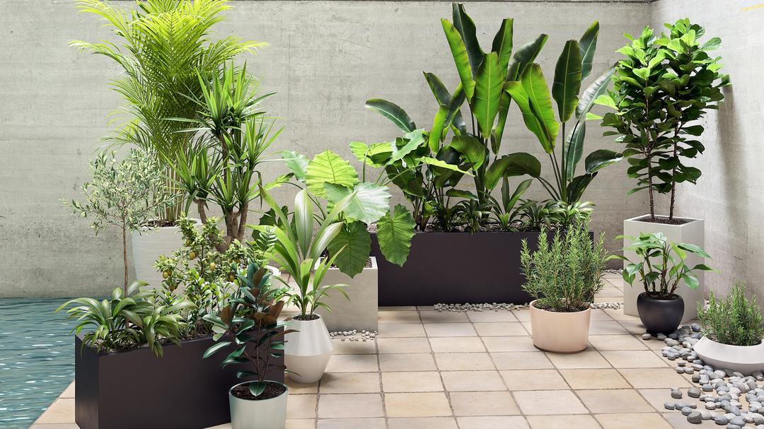 Maxtree - Plant Models Vol 19