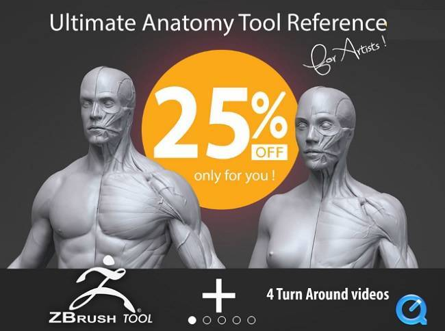 Gumroad – Ultimate Anatomy Tool Reference for Artists