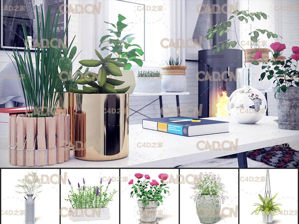 30个室内盆栽植物C4D模型合集 Interior Plants 3D Models Collection,3D模型,C4D之家