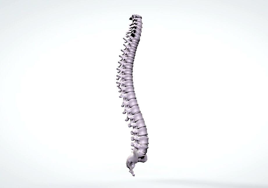 3d anatomical model rotation human spine 人体脊椎视频动画