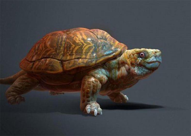 Turtle PBR乌龟模型 海龟模型