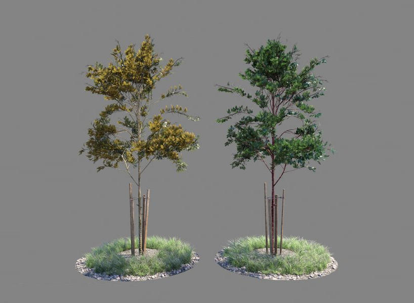 Young tree 04 PBR 3D-Model 幼树PBR模型 树苗模型