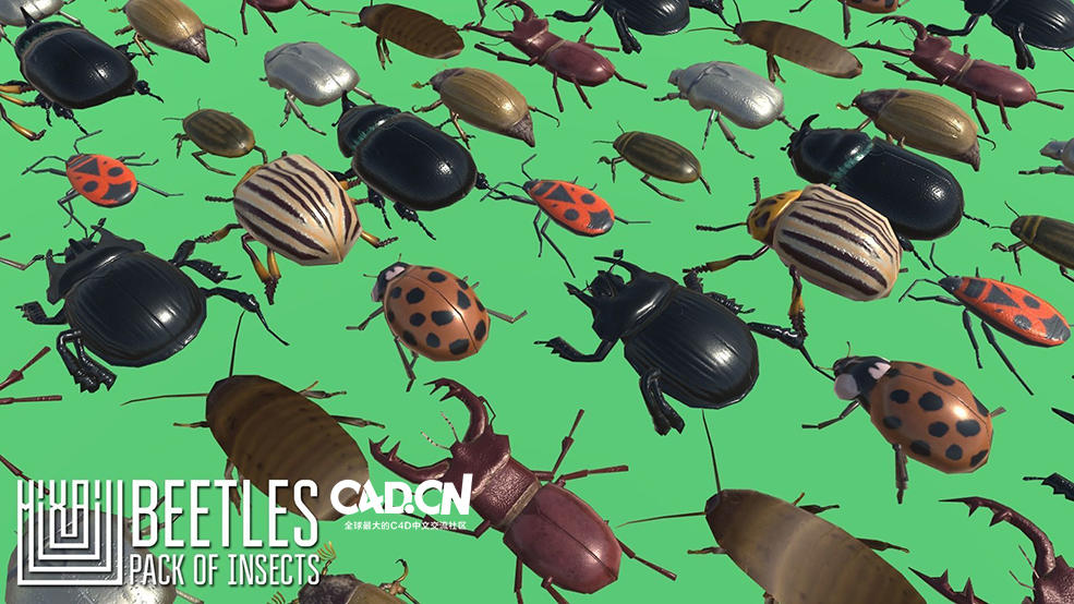 60个甲虫昆虫3D模型 Insects and Beetles Pack