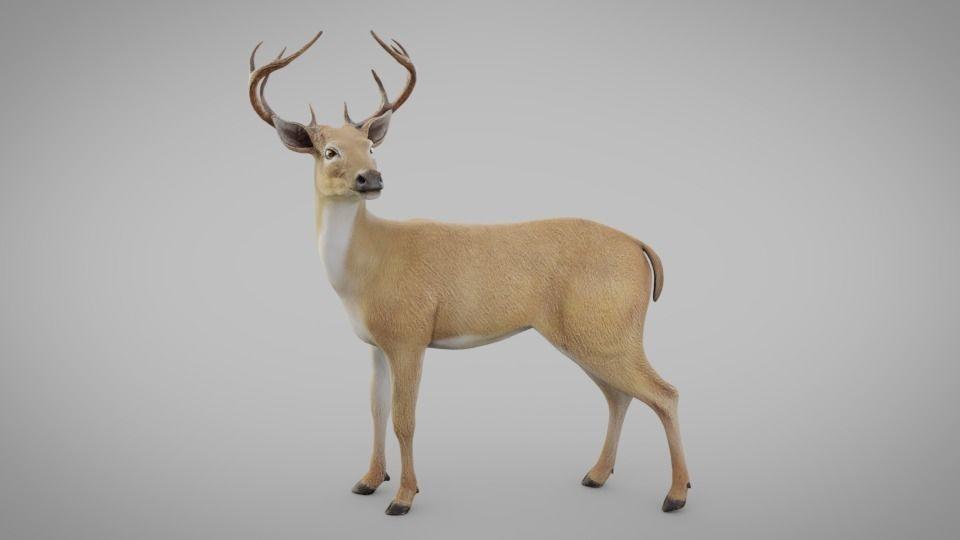 小鹿模型 梅花鹿模型 麋鹿模型High quality posed Deer model