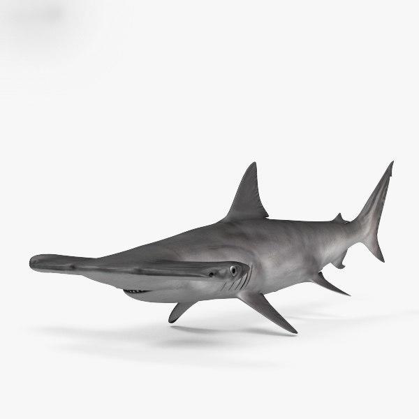 Hammerhead Shark锤头鲨 鲨鱼模型 锤头鲨鲨鱼模型  max+fbx+obj
