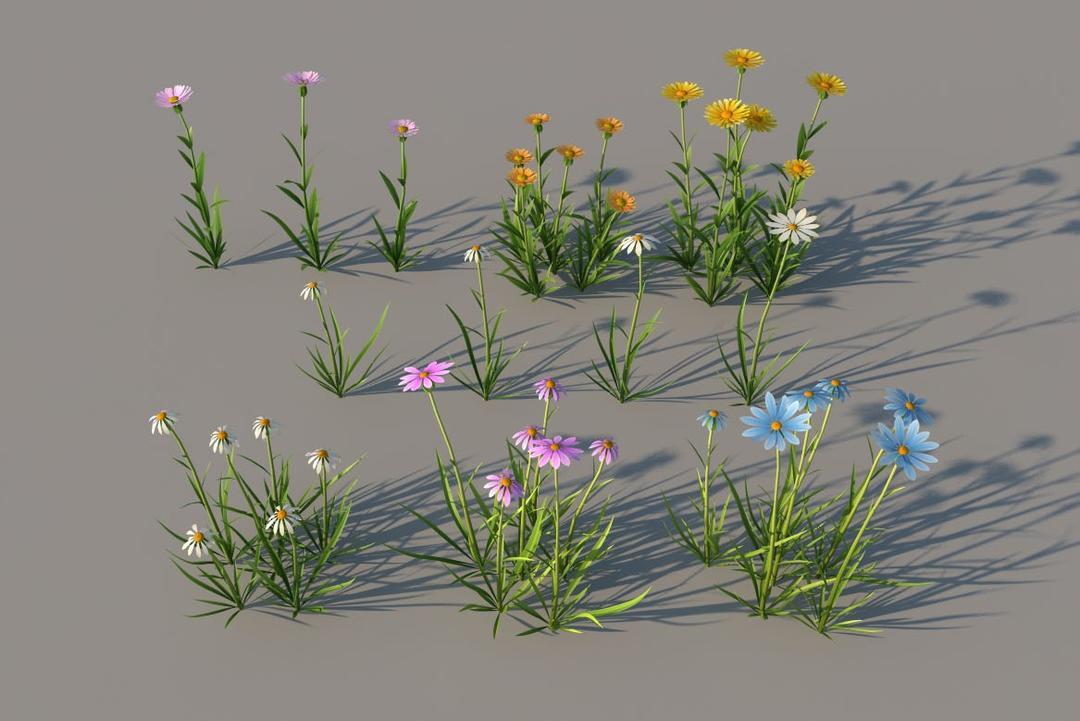 菊花C4D模型:黄菊花、白菊花、粉菊花、蓝菊花,3D模型 家