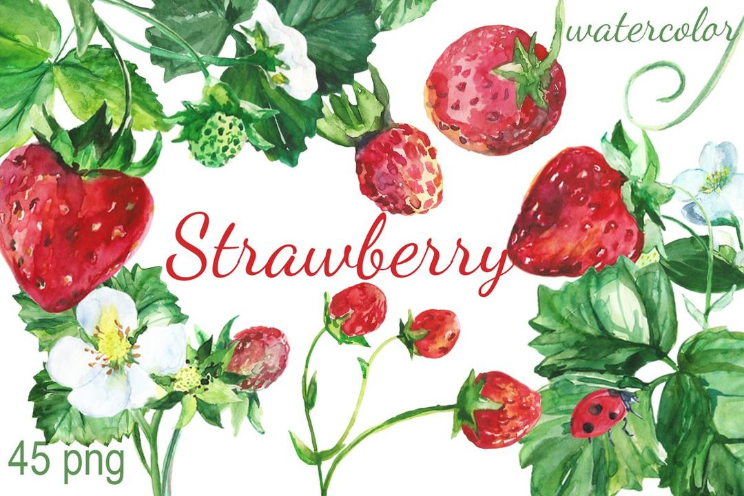 Watercolor Strawberry Clip art 草莓水彩插画 草莓水彩插图