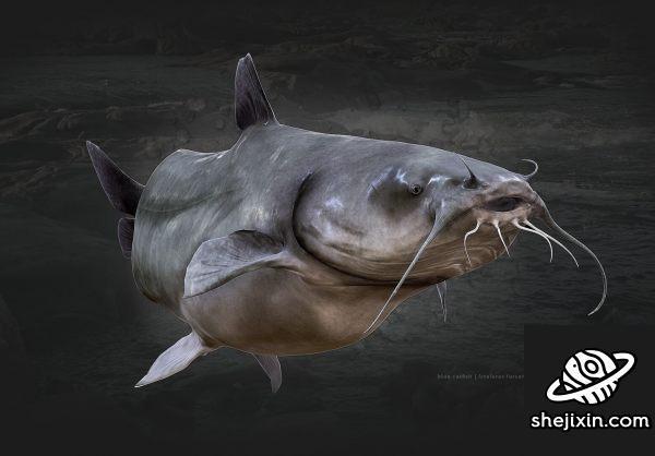 鲶鱼模型 Blue Catfish PBR