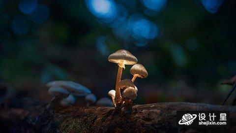 Adrian Sommeling - The recipe for Glowing Mushrooms