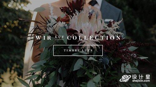 White In Revery – Timbre LUTs – Professional Color Grading LUTs (Win/Mac)