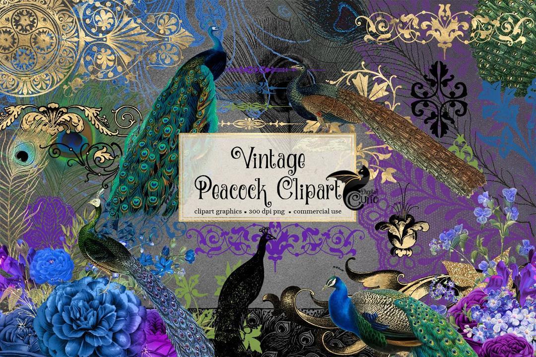 Vintage Peacock Clipart 孔雀羽毛素材