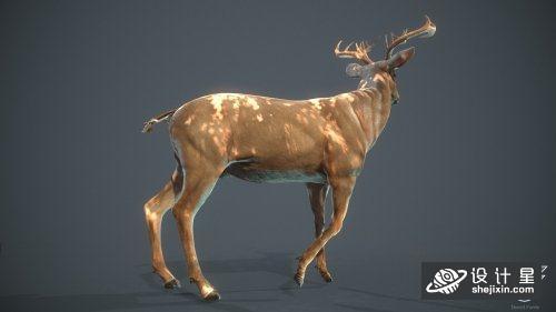 白尾鹿 梅花鹿 麋鹿模型 雄鹿模型 小鹿模型 森林白尾鹿 White-tailed Deer