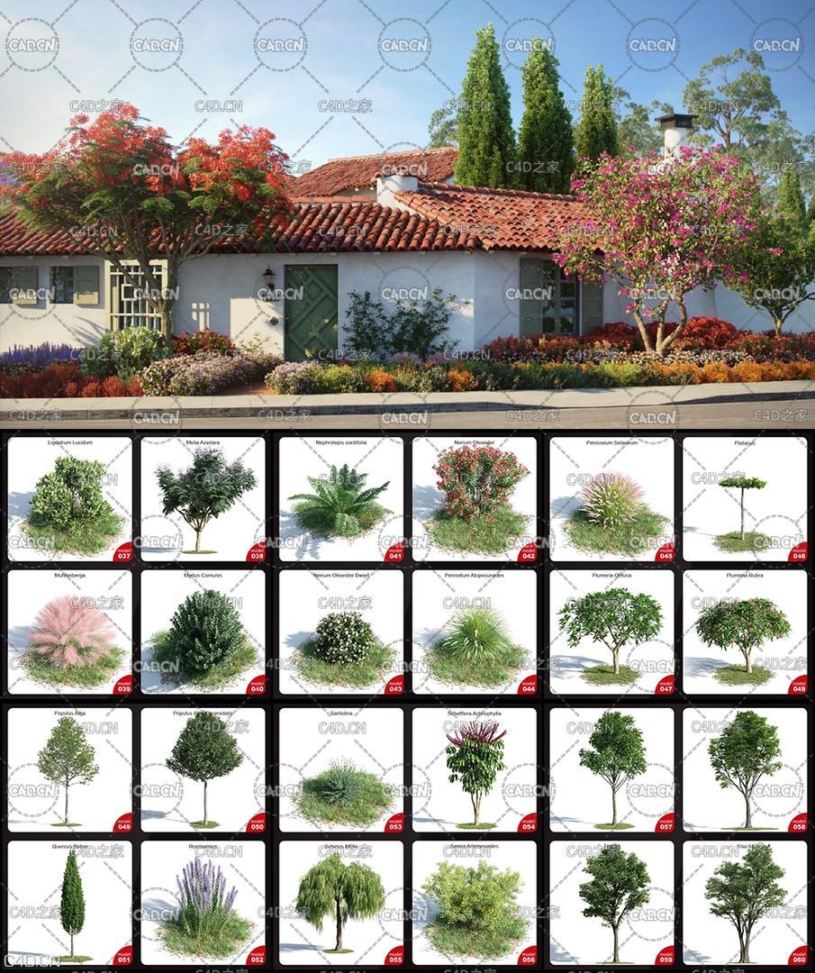 60个高精度植物树木C4D模型 EVERMOTION ARCHMODELS VOL.154-3D模型