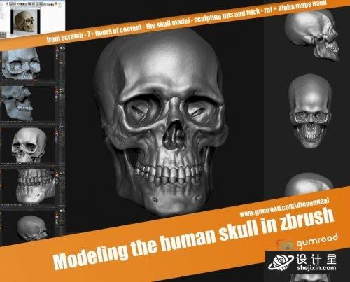 Gumroad – Modeling the human skull in zbrush