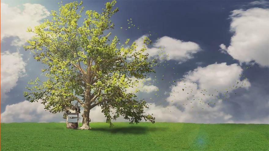 Digital Tutors - 使用 SpeedTree 建模真实的树模型